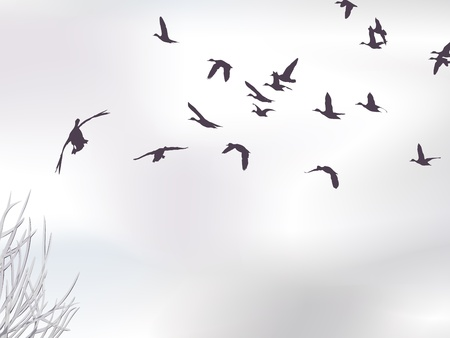 winter skyscape with mallards Vector
