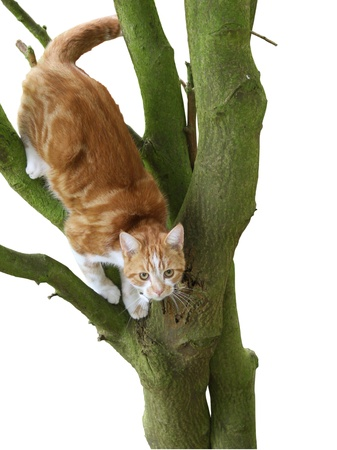 stuck up: Cat stuck up in a tree Stock Photo