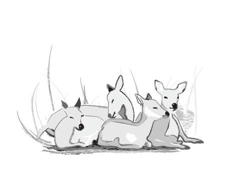 fallow deer: Resting deer herd Illustration