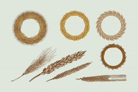 wheat harvest: Four Harvest Wreaths Illustration Illustration