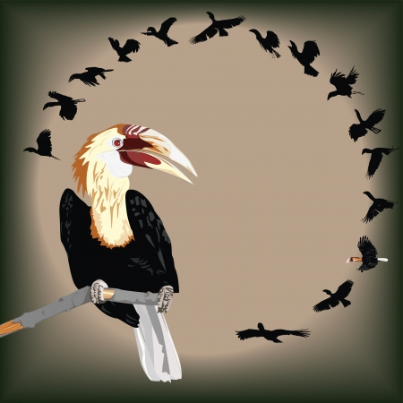species: Illustration of Walden s Hornbill - critically endangered bird species Illustration