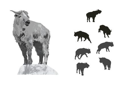 Illustration And Silhouette Set Of Takin Vector