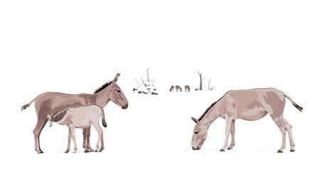 animales del desierto: Equus hemionus asnos salvajes Ilustración