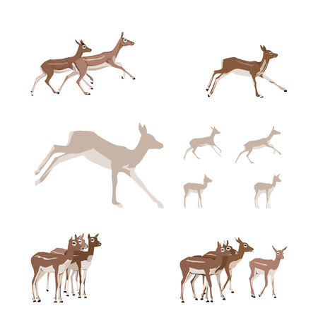 gazelle: Antelope illustration set - design elements  Illustration