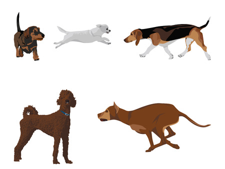 fullbody: Dogs vector set  design elements