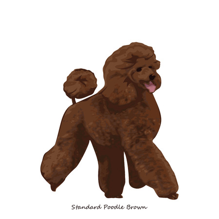 fullbody: Poodle dog breed illustration Illustration