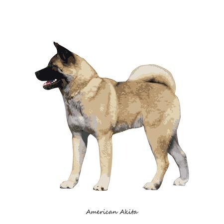 akita: Akita Inu dog breed illustration Illustration