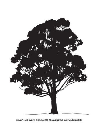 arboles blanco y negro: Eucalyptus camaldulensis o Río Rojo Silueta Gum Vectores