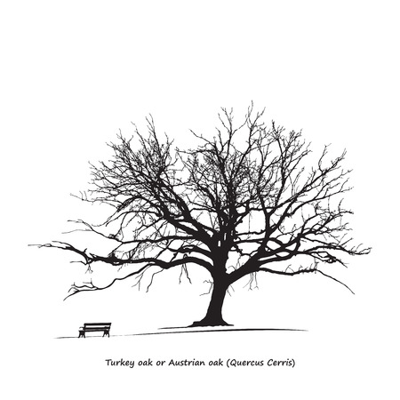 quercus: Quercus Cerris Turkey oak Silhouette Illustration
