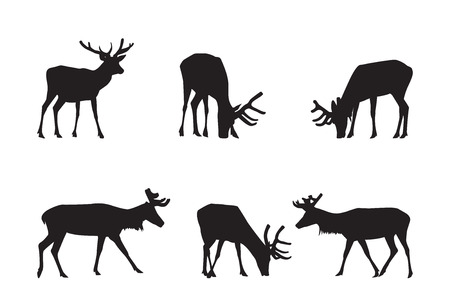 decoration elements: Buck Deer Silhouettes - decoration elements