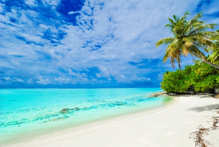 Tropical beach with palm tree, white sand and clear water photo