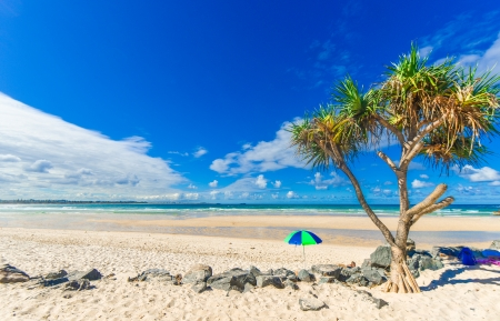 Beach with palm tree and umbrella