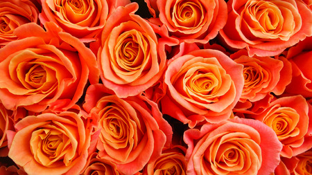 A bunch of orange roses photo