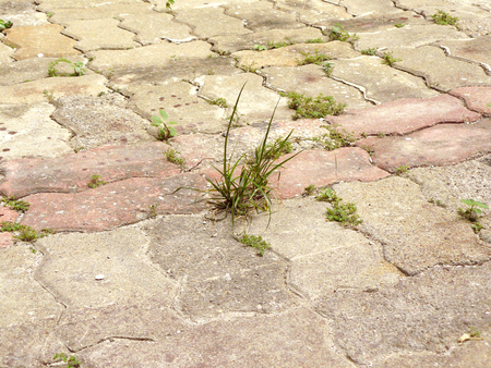 between: Still life of the little plants of weed growing through crack in old pavement in the sunny day Stock Photo