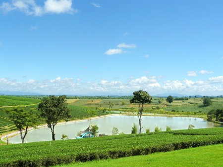 clearly: Reservoir of tea plantation and clearly green of tea plantation with beautiful blue sky and white fluffy clouds landscape. Stock Photo
