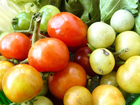 Close up the group of small Tomato (LYCOPERSICON ESCULENTUM MILL.) Vegetable good for healthy diet food and skin for mask up on your face.