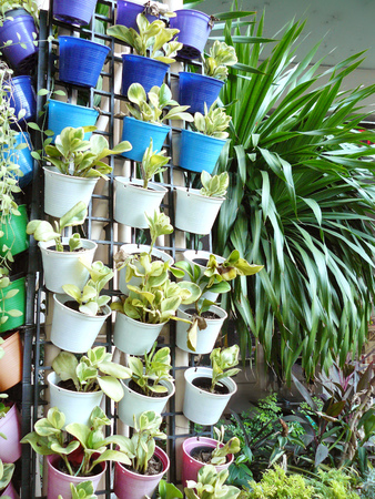 Vertical garden on wall of column, Small flower pots on vertical garden for texture and background.