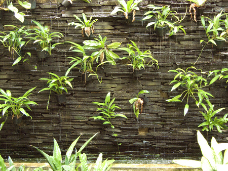 Vertical garden on rock brick wall and water fall falling through the brick of wall and plants in flower pots. Many small flower pots on vertical garden for texture and background. Stock Photo