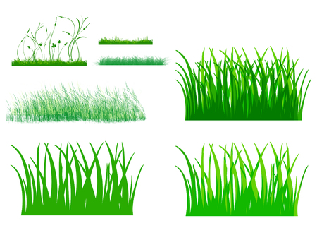 tall grass: Illustration of cute grass set, The various style of green grass, green leaves small weed flower isolated on white background.