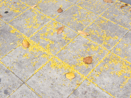 Background and texture of yellow petal and dry leave on gray stone pavement of brick street at a autumn day.