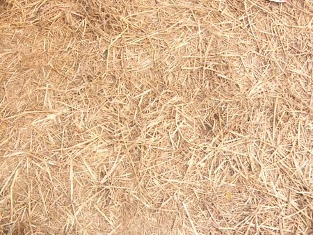 Dry straw or hay on the ground. close up for a background and texture.