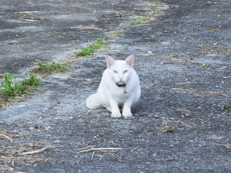 White cat laying on the ground. 版權商用圖片