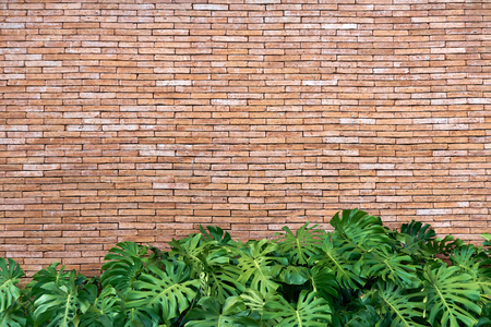 red brick wall texture grunge background with ornamental plants below, may use to interior design. copy space. Stok Fotoğraf - 87634639