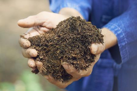 Les agriculteurs utilisent des deux mains en argile avec une balle de riz. Peut être utilisé comme engrais pour nourrir la croissance des arbres. Banque d'images - 87726450