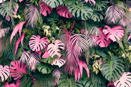 Tropical trees arranged in full background Or full wall There are leaves in different sizes, different colors, various sizes, many varieties. Another garden layout.as background with copy space. Stock Photo - 98866362