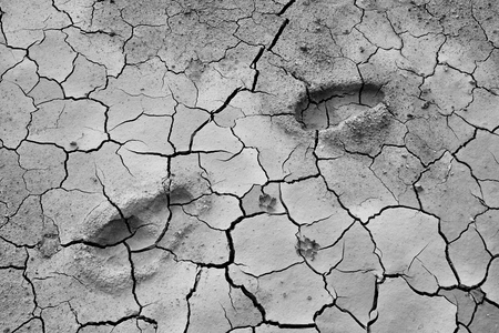 Details of the ground The cracks in the soil. Due to the lack of moisture in the soil, the characteristics of the dehydrated clay are separated. Drought On the conservation of soil and water. Kho ảnh