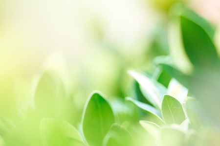 The background image is blurry green leaves feeling refreshed. And have a good environment. Make a background with copy space using as natural green plants , ecology concept Banque d'images