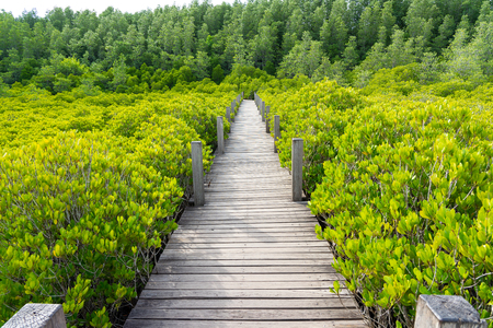 mangrove forest (Ceriops decandra) Also known as the Golden Meadow Prong destinations of Rayong, Thailand is a natural shoreline. Stok Fotoğraf