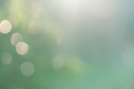 blurred green nature background with natural light with copy space. Standard-Bild - 114603211