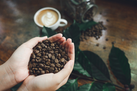 Beautiful hands holding coffee beans As a raw material for making coffee Refreshing drink Useful for the body with a glass coffee background and leaves from the coffee tree