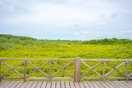 mangrove forest (Ceriops decandra) Also known as the Golden Meadow Prong destinations of Rayong, Thailand is a natural shoreline. 写真素材