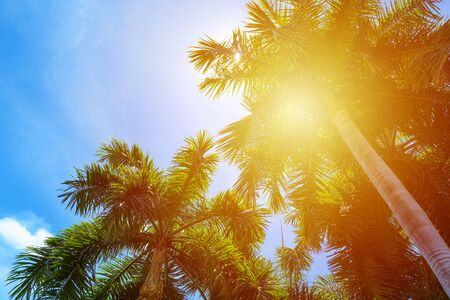 Tropical palm tree with sun light on a bright blue sky background. summer vacation and travel holiday concept with Copy space and abstract background summer.