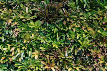 Tropical trees arranged in full background Or full wall There are leaves in different sizes, different colors, various sizes, many varieties. Another garden layout.as summer background with copy space 免版税图像