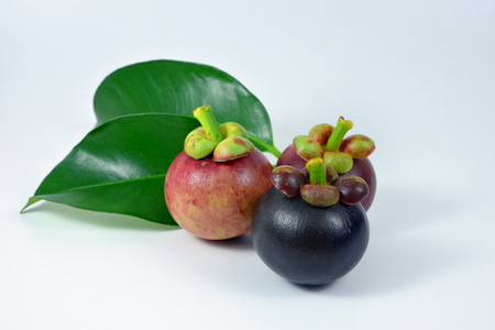 Asian fruit mangosteen tree colour on white background. Stock Photo