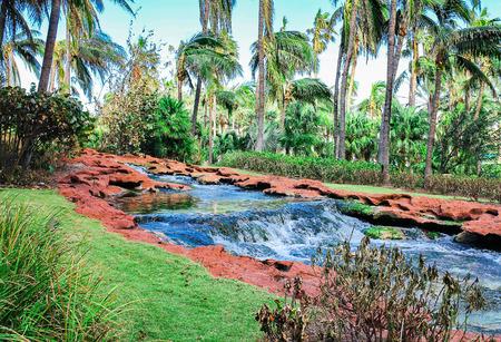 springwater: Creek in a jungle Stock Photo