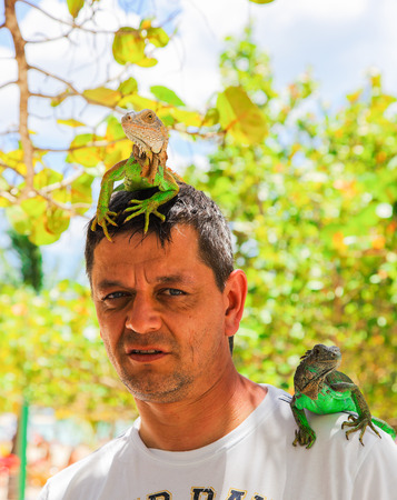 head and shoulder: Man with iguana on his shoulder and head Stock Photo