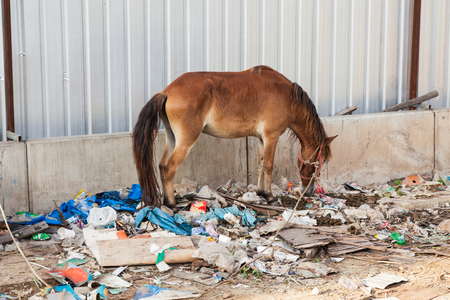 A horse in Thailand stands in the waste and its own excrement. Stock Photo