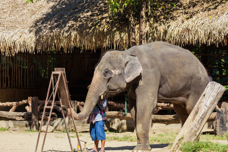 big5: An elephant paint a watercolor.