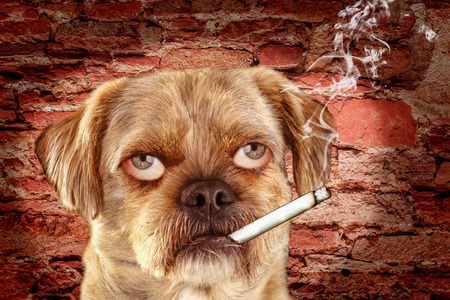 loopy: Mixed-breed dog with human eyes and burning cigarette in mouth - photomontage Stock Photo