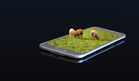 3D photo on a smartphone - Sheep on a meadow Stock Photo