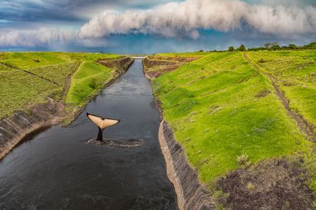 Whale tail in the Canal del Aguapey near the town of San Cosme y Damian in Paraguay just before a thunderstorm.