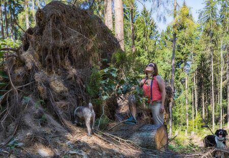 Woman with two dogs at a huge ripped root. Stock Photo