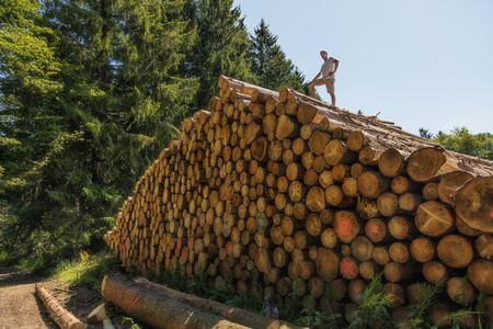 A man has climbed a huge pile of wood. On one of the lower tree trunks is written in English: Enter prohibited