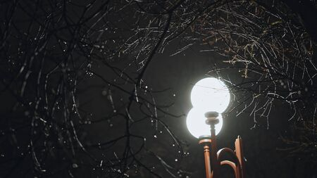 Street light glowing among wet bare tree branches in the night during rainy weather, viewed from low angle