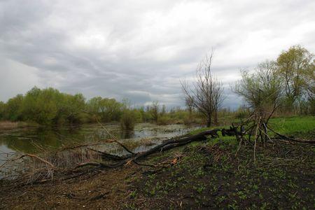 Dead tree in swamp Stock Photo - 6040937