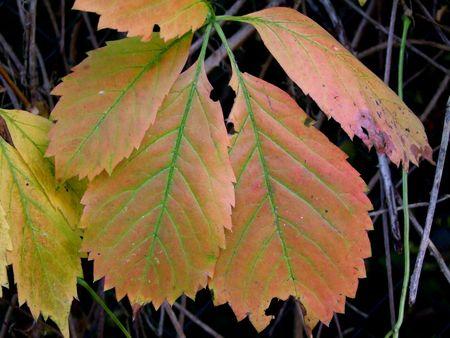 autmn: Leaf